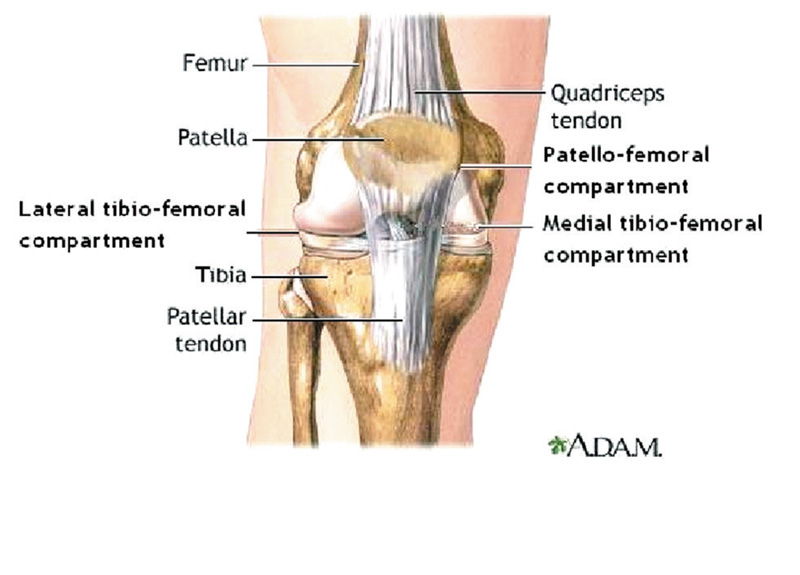 5c27a5a58a Offloading strategies for knee osteoarthritis | Lower Extremity ...