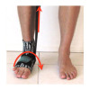 Foot/Ankle E-Module