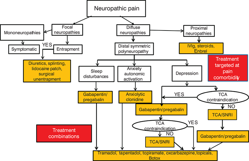 Neuropathic Pain Mechanism Neuropathic Pain After