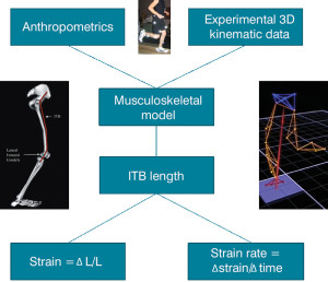 Figure 1. Schematic illustrating how computer simulations of human movement can model the musculoskeletal system using subject-specific anthropometrics and 3D motion data. These models can be used to calculate ITB strain and strain rate. (L = length of the ITB.)
