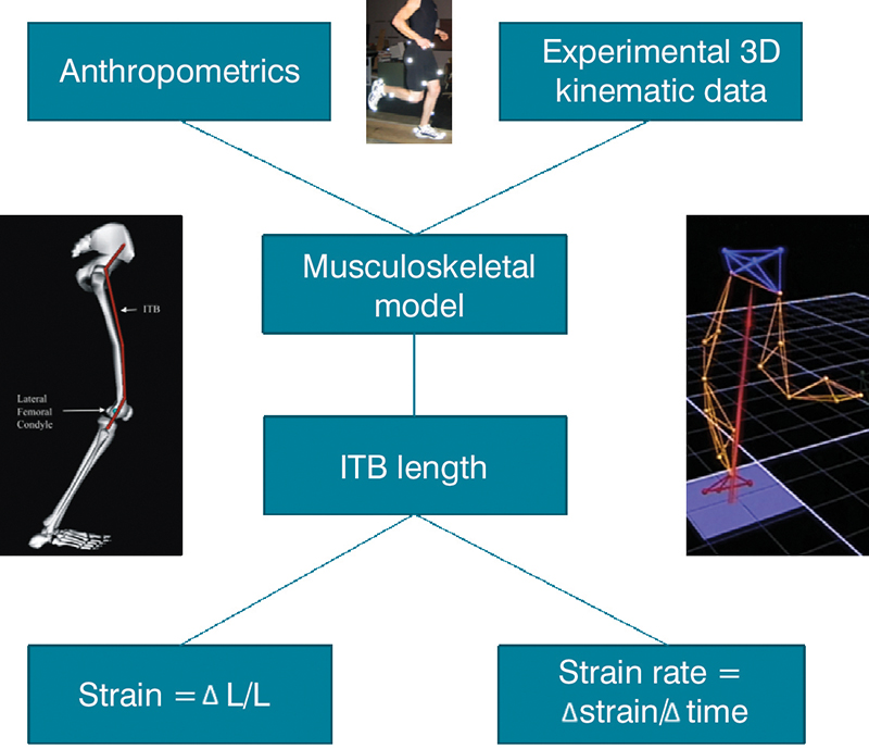 A New Approach To Iliotibial Band Syndrome In Runners Lower