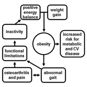 Figure 1. Obesity-related abnormal gait and functional limitations form a feedback loop with inactiv- ity and weight gain, exacerbating obesity and associated metabolic and cardiovascular comorbidities.