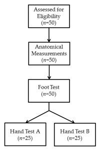 Figure 2. Design of the Slade et al17 shoe-mass perception experiment.