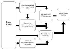 Figure 1. This chart illustates the different ways in which excess weight may affect knee OA pain.