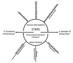 Figure 4. The STARS project focuses on examining how manual therapies at each sensory entry point affect the motor output and functional performance of those with CAI. By de- veloping an understanding about how these treatments affect the system, more robust treatment strategies for CAI patients can be tailored to their sensory issues.