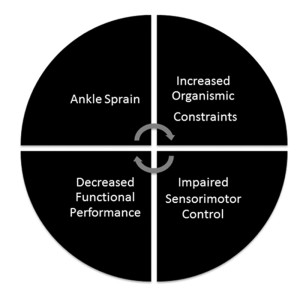 Figure 2. The continuum of disability. Ankle sprains introduce increased organismic constraints to the body, which in turn impair sensorimotor control. This in turn de- creases functional performance, which increases the risk of a subsequent ankle sprain.