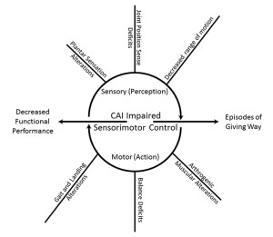 Figure 3. The relationship of sensory and motor impairments associated with CAI. On the sensory side, deficits in plantar information, joint position sense, and range of motion may contribute to alterations associated with the motor output of the sys- tem. Typically, research has evaluated the quality of motor output as it relates to CAI; however, a growing body of literature suggests sensory issues are present and may be driving the dysfunction associated with the condition.