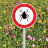 Peripheral neuropathy in Lyme disease patients