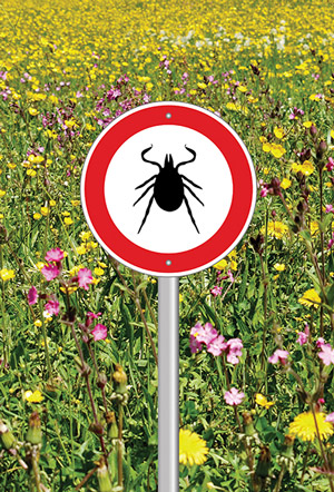 Peripheral neuropathy in Lyme disease patients | Lower Extremity