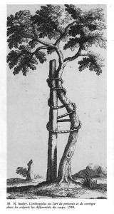 The Andry Tree Illustration