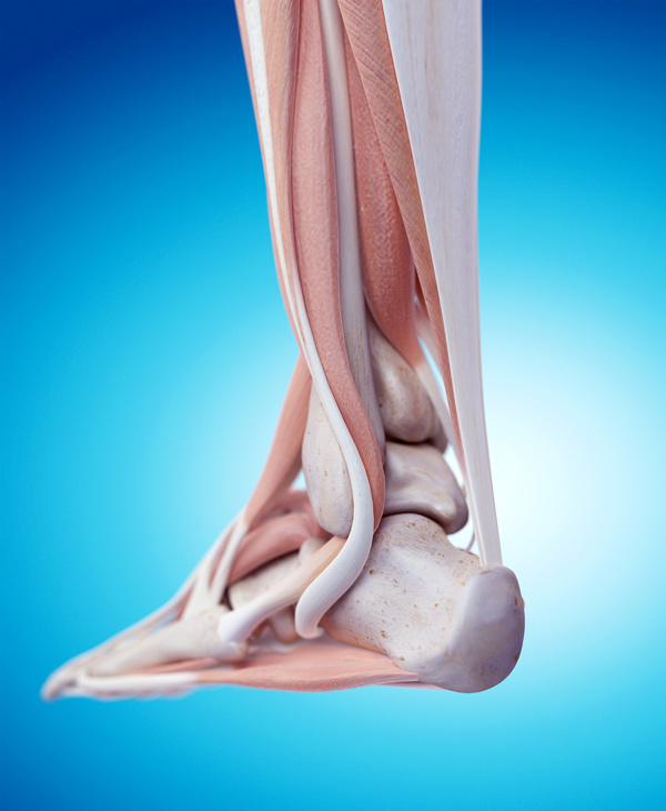 498c455303d7c What role for eccentric exercises in conservative treatment of achilles  tendinopathy